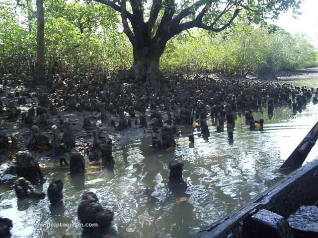 Help Tourism Photogallery Of Sundarban National Park